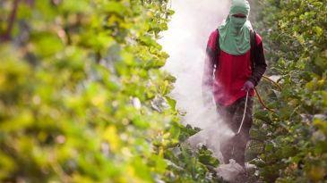 De abelhas a trabalhadores: o ciclo de morte gerado pelos agrotóxicos